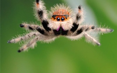 [:nl]Enge spinnen en mooie mannen[:en]Creepy Crawlers and handsome hunks[:]
