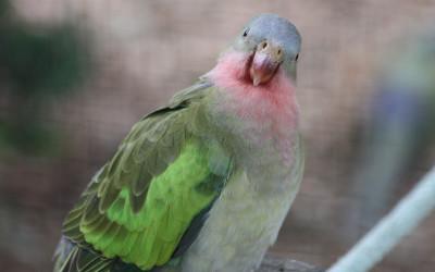 [:nl]Rare vogels![:en]Weird birds[:]
