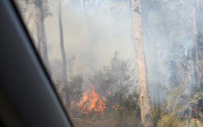 [:nl]Grote bomen, zwarte bomen en verhitte bomen[:]
